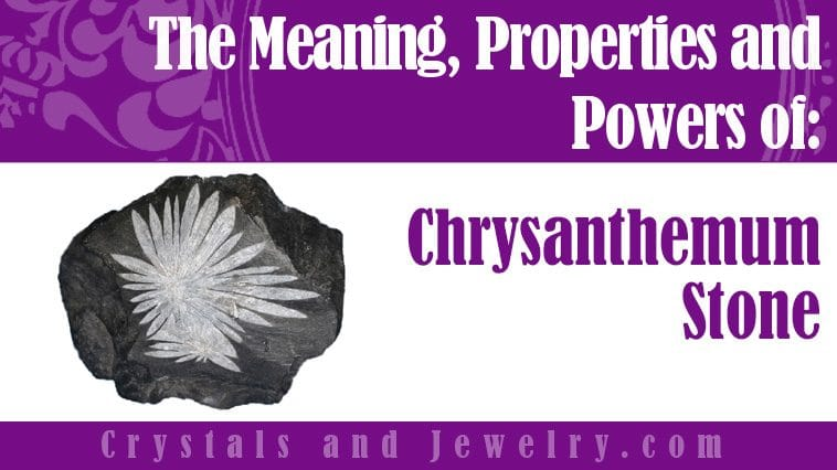 chrysanthemum stone meaning